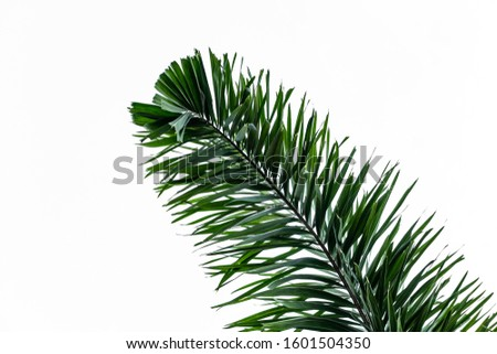 Beautiful big green palm leaf isolated on a white background #1601504350