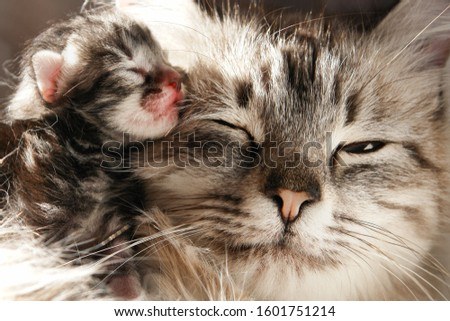 Mother cat and her newborn kittens #1601751214