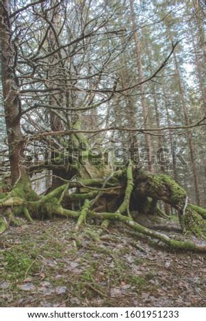 Old fallen mossy tree trunk #1601951233