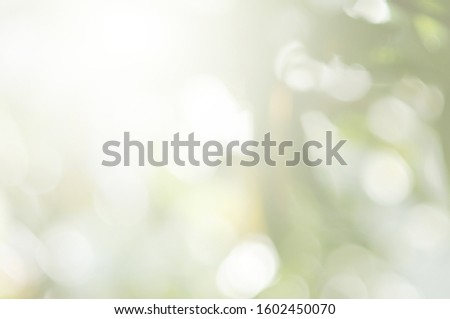 Abstract blur green color and spring effect adjustment concept for design Green leaves with light  the sun survives  beautifully for blurred backgrounds #1602450070
