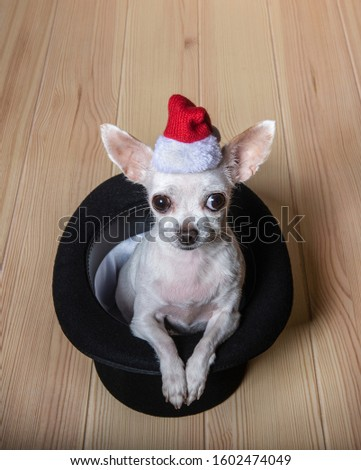 a small Chihuahua dog with a Santa hat on his head is sitting in a black bowler hat. A black bowler hat stands on a wooden textured countertop. #1602474049