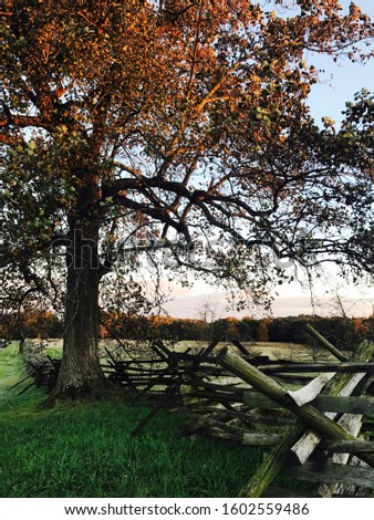 Gettysburg Pennsylvania battlefield near the Peach Orchard Fence and Fall Tree #1602559486