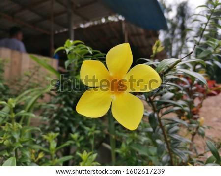 Yello Flower by Huawai nova #1602617239