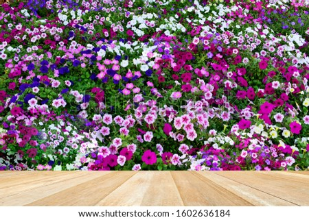 Empty top wooden table on closeup beautiful petunia flowers in the garden #1602636184