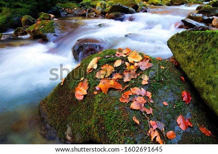 morning sunrise landscape, amazing mountains view on waterfall in autumn forest, water stream between red leaves and stones at gold sunlight, colorful nature dawn image, Europe, the best photo