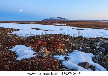 Scenic landscape with tundra, lonely mountain and moon. In June in the Arctic in the tundra, not all snow has melted yet. Beautiful nature of the far North. Anadyr tundra, Chukotka, Siberia, Russia.
