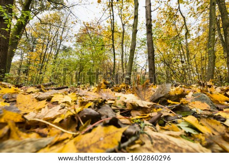 specific autumn weather in the forest with yellow and green foliage, landscape with foliage falling to the ground #1602860296