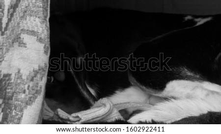 homeless dog sleeping in a cardboard box on the street