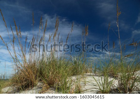 Sea Oats Sway in the Breeze in Jacksonville Beach, Florida #1603045615