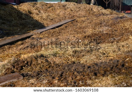 Muck heap with horse manure #1603069108