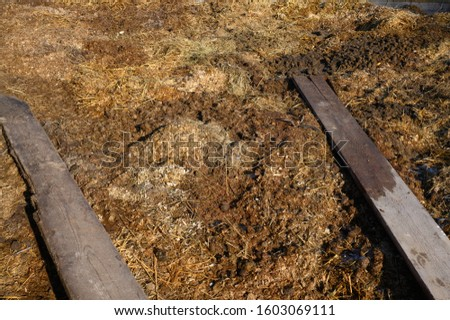 Muck heap with horse manure #1603069111