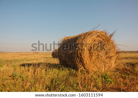 rolls of hay lying in autumn sun on mown field #1603111594