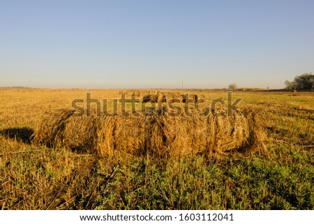 rolls of hay lying in autumn sun on mown field #1603112041