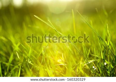 Grass #160320329
