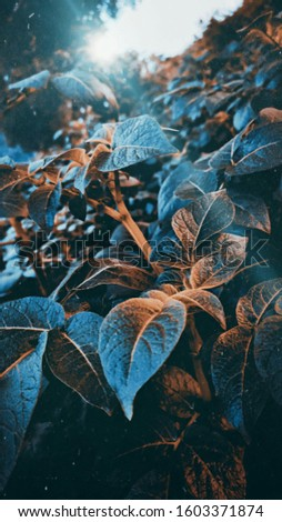 A beautiful pic of leaves in Black, Blue and Yellow colour. The pic is cputred in the winter season of India in the Beautiful morning.