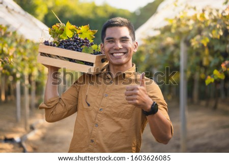 Freshly harvested blue grapes in the hands of happy farmers. Young vintner is harvesting white grape in the vineyard by sunny weather. #1603626085