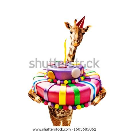 Giraffe with birthday cake and cap isolated white
