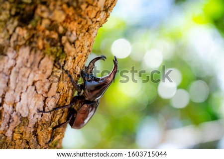 Dynastinae or rhinoceros beetles or fighting beetles on the tree with nature blurred background. Rhinoceros beetle, Hercules beetle. #1603715044