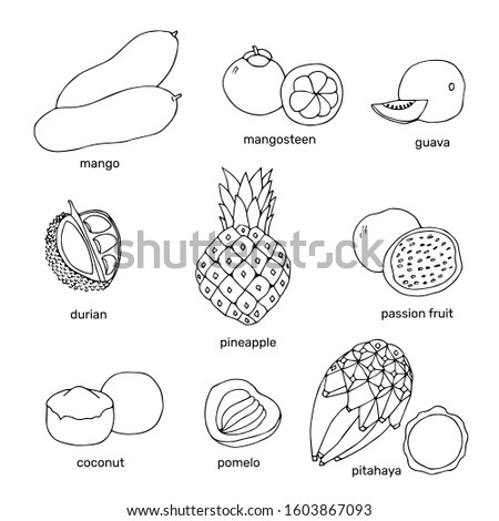 Hand drawn exotic fruits collection. Outline tropical drawing fruits. Sketch vector illustration. #1603867093