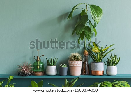 Stylish living room interior with compositon of beautiful plants in differents hipster and design pots on the green shelf. Green wall. Modern and floral concept of home garden jungle. Template.
