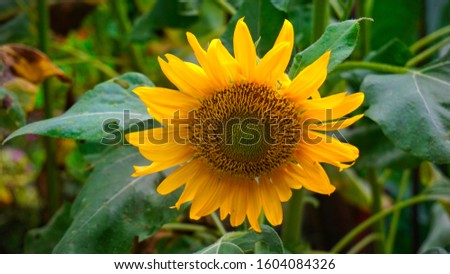 single object of flower background photography