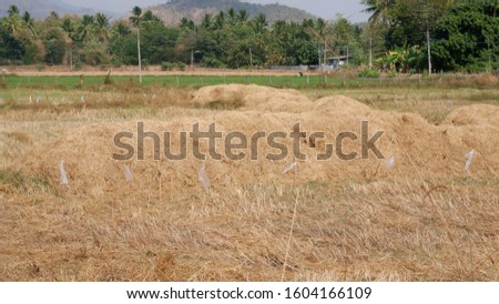 Dry baled hay bales stack, rural countryside straw.  #1604166109