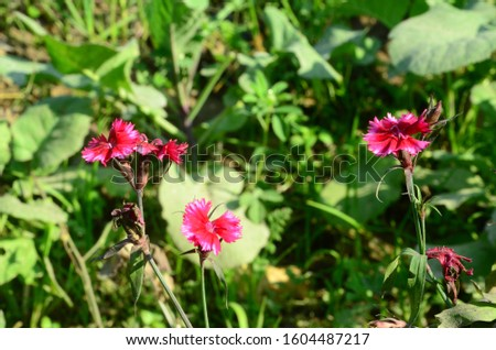Red Flower with Green Leaf HP India  #1604487217