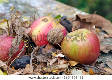 autumn organic fruits, apple with walnut in shell on the fall leaves ground #1604505469