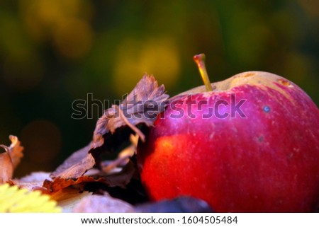 autumn organic fruits, apple with walnut in shell on the fall leaves ground #1604505484