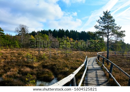 Wood path through the black bog moor in the Rhön, Bavaria, Germany, in autumn, in the sunlight, with blue sky and moor eyes Royalty-Free Stock Photo #1604525821