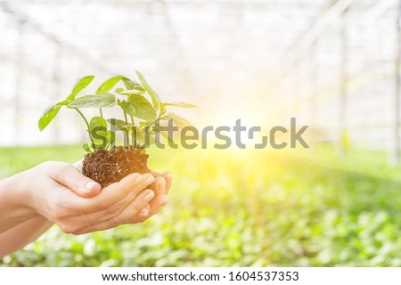 Female botanist holding seedling in plant nursery #1604537353