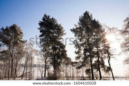 bright Park and Sunny weather, Sunny day and light illuminates crystals of snow and frost on the branches of grass and trees #1604610028