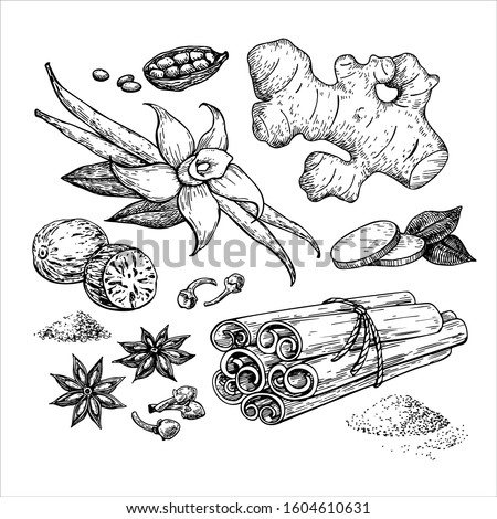 Winter spice vector drawing. Flavoring seeds and herbs for christmas food and drinks. Set with cinnamon, vanilla, star anise , ginger, nutmeg and other. Mulled wine ingredients sketch. Royalty-Free Stock Photo #1604610631