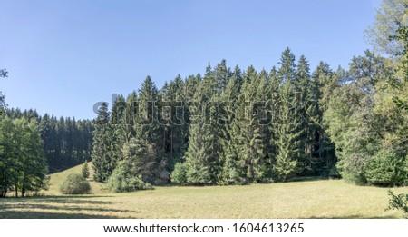green glade and fir woods of Black Forest, shot in bright summer sun light near Betzweiler, Stuttgart, Baden Wuttenberg, Germany #1604613265