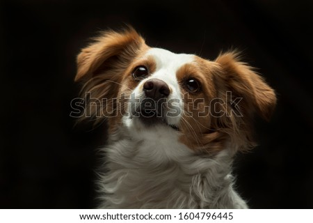 Dog Pet Animal Puppy White Canine Pedigree Doggy  #1604796445