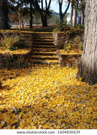 fall leaves on the ground #1604830639