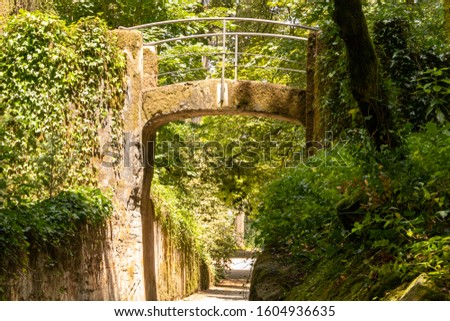 Nature park pathway with lush greens #1604936635