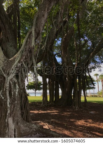 Banyan trees and palm trees #1605074605