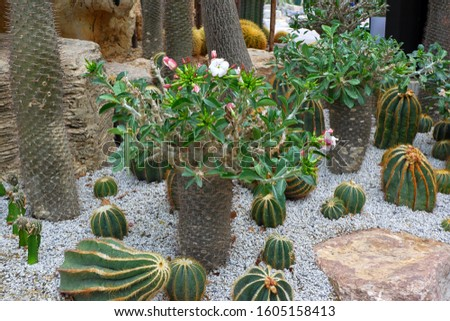 Cactus bushes in the garden during the day #1605158413
