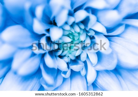 Abstract floral background, blue chrysanthemum flower.  #1605312862