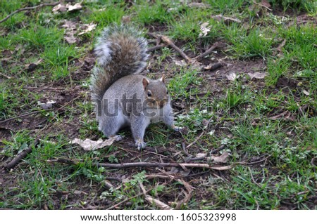 Squirrel caught by surprise in park #1605323998