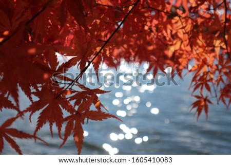 Reflect with maple, Reflect, Maple, Japan, Autumn #1605410083