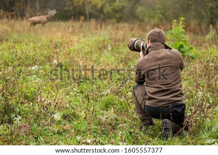 Wildlife photographer in brown cloths taking pictures of red deer, cervus elaphus, stag roaring on a meadow. Man with brown hair holding camera with telephoto lens in nature.