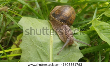 cute snail in the garden #1605561763