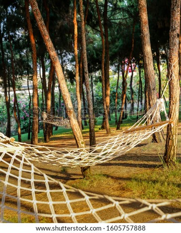 Summer garden under the pine trees with hanging hammock for relaxation, summer vacations concept #1605757888