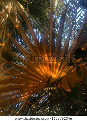 Sunny day.Light from the palm.Cyprus #1605762346