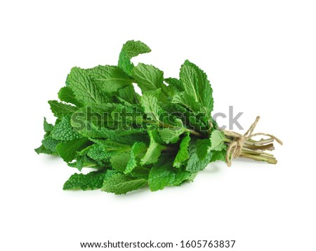 Fresh mint bunch isolated on white background. Spices and medicinal herbs concept.                                Royalty-Free Stock Photo #1605763837
