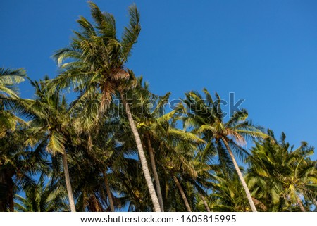 Palm trees against blue sky. #1605815995