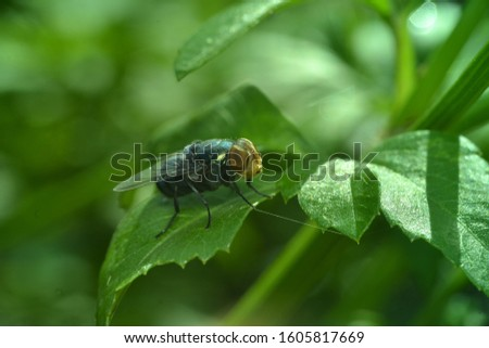 Close up macro shot House fly, Fly, House fly on leaf #1605817669