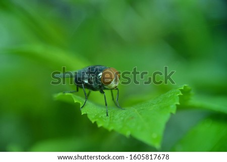 Close up macro shot House fly, Fly, House fly on leaf #1605817678